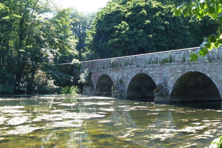 Enjoy riverside walks along the River Stour as it runs through Blandford Forum.